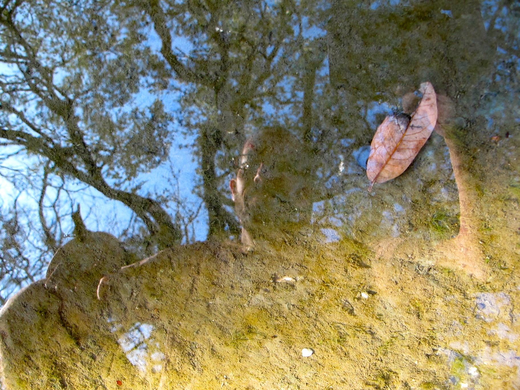J Reflection In Blunn Creek