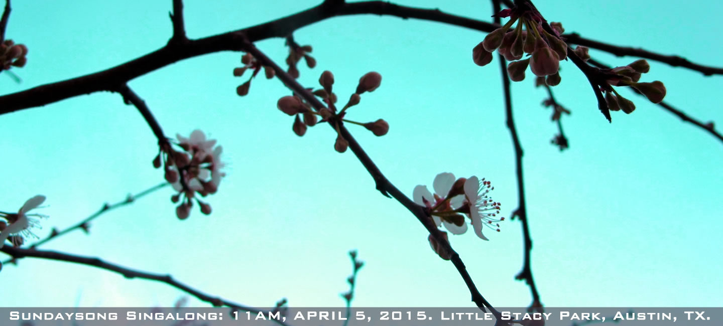 Sky through the blooming buds of Spring, flier